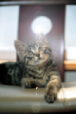Cat052