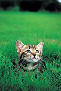 Cat056